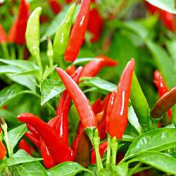 Scoville Rating (1-10): 7