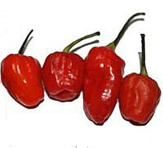 Scoville Units: N/B (Medium heet tot heet)