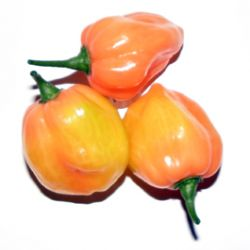 Habanero Burning Bush