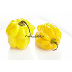 Habanero Yellow Super F1