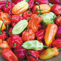 Habanero Tobago Seasoning
