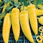 Hungarian Yellow Wax (sweet)